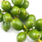 SunTrim Plus Green Coffee Beans