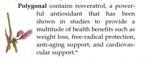 Polygonum Resveratrol antioxidant from plants